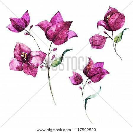 Watercolor raster bougainvillea flowers