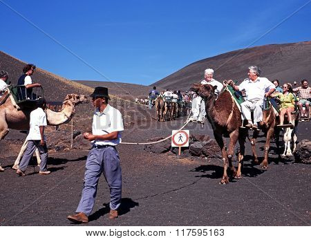 Camel Safari, Timanfaya National Park.
