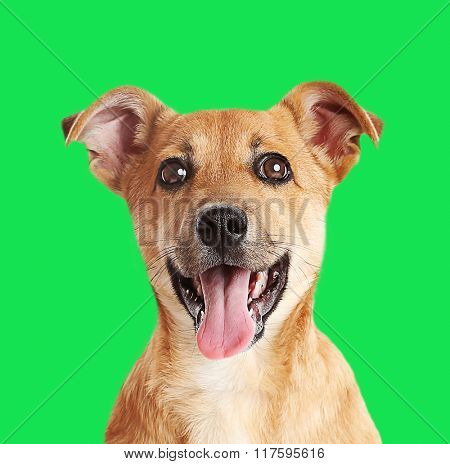Little cute puppy on green background