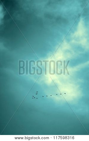 Birds Flying In Sky, Vintage.