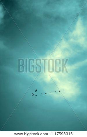 Birds Flying In Sky, Vintage.