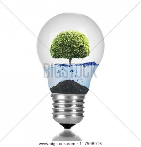Tree growing inside light bulb with water isolated on white