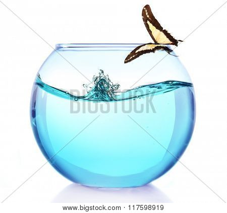 Fish bowl with water and butterfly on it isolated on white