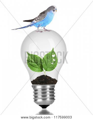 Little blue parrot sitting on light bulb with green leaves isolated on white
