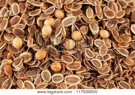 Placer Dried Fennel Seeds