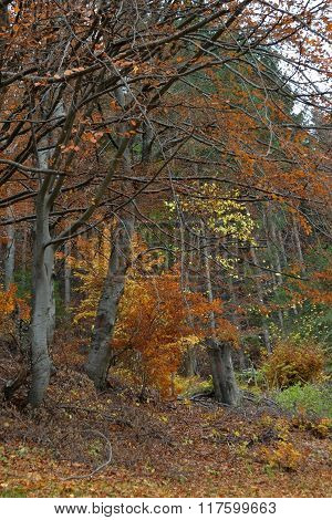 Vegetation fall