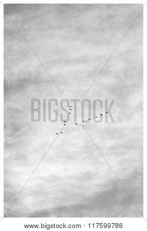 Thirteen Flying In Sky, Black & White