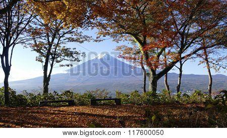 Fall Season Of Fuji Mountain