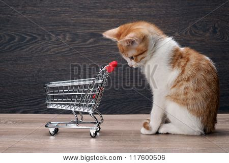 Grocery supermarket trolley and kitten
