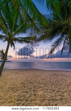 Coconut trees on the beach at sunset