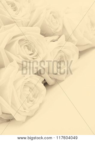 Beautiful White Roses. Soft Focus. In Sepia Toned. Retro Style