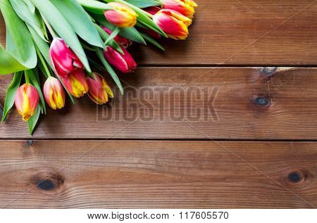 flora, gardening and plant concept - close up of tulip flowers on wooden table