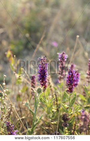 Beautiful wild flowers in the field