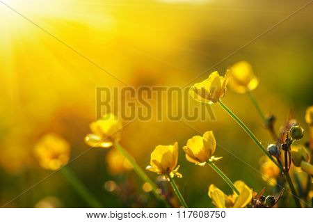 field of spring flowers and sunlight