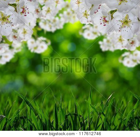 Spring blossom with soft blur background and grass