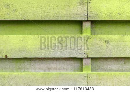 Weathered Fence With Wooden Planks With Algae.