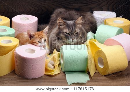 Cats and colored toilet paper
