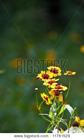 Yellow And Red Wildflowers