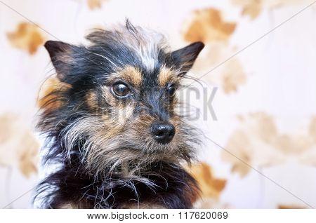 Little Dog Portrait
