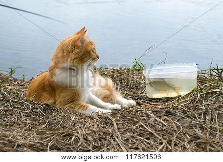 Ginger cat with caught fish on fishing time.