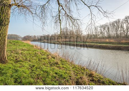 Bare Branches Hanging Over The Water