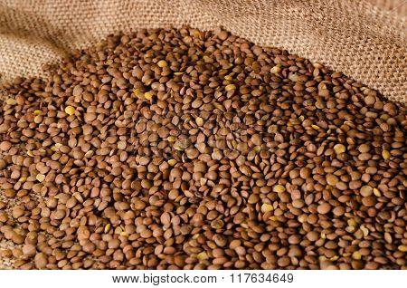 The grains of lentils