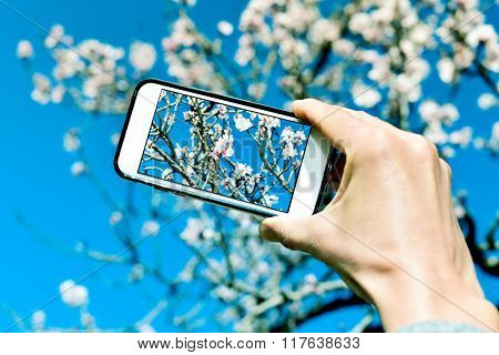 closeup of a young caucasian man taking a picture of an almond tree in full bloom with his smartphone