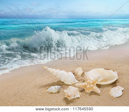 The shells on sea shore.
