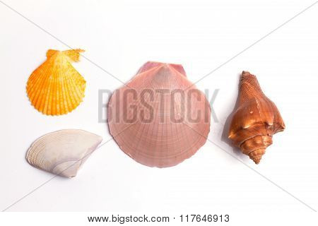 Seashell Collection On The White Background