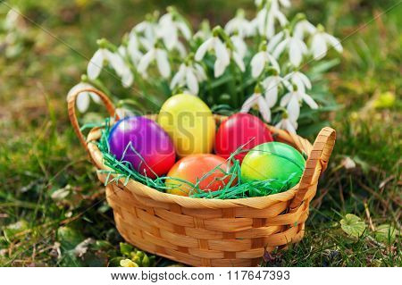 Small basket full of colorful easter eggs with snowdrops on background