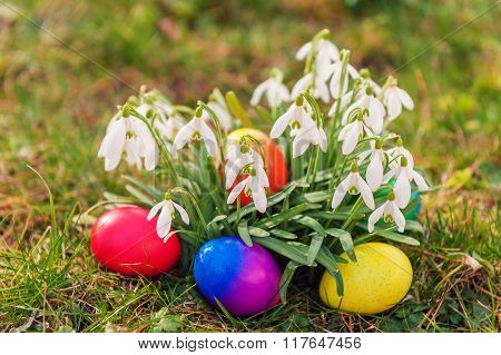 Colorful easter eggs laying between snowdrops