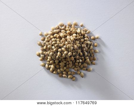 top view of corainder seeds