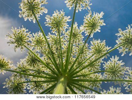 White Blossoms Stem Closeup