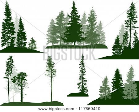 illustration with fir trees set isolated on white background