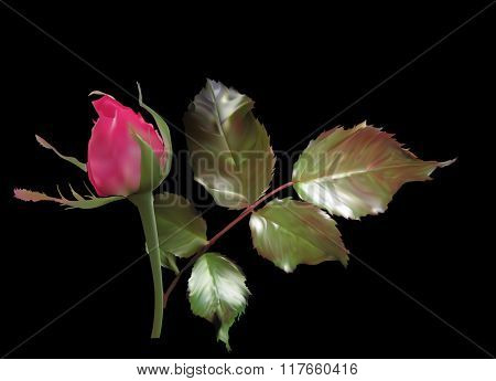 illustration with red rose bud and foliage on black background
