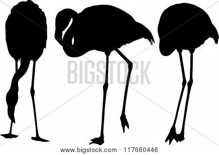 illustration with set of three flamingo silhouettes isolated on white background