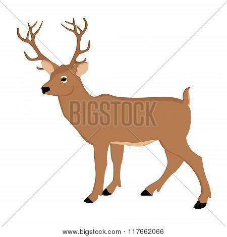 Deer Forest Animal