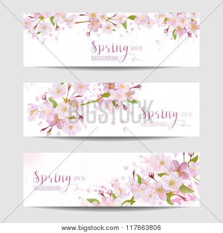 Spring Flower Banner Set - Cherry Blossom Tree - in vector