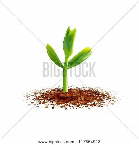 Young sprout at soil illustration