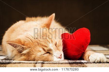 Golden red beautiful cat asleep