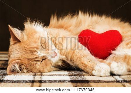 Red cute fluffy cat asleep hugging soft plush heart toy