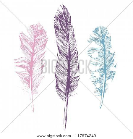 3 hand drawn feathers on white background