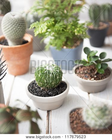 Cactus Plant Tree Pot Nature Environmental Conservation Concept