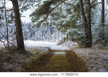 Deserted Path Through A Snowy Forest