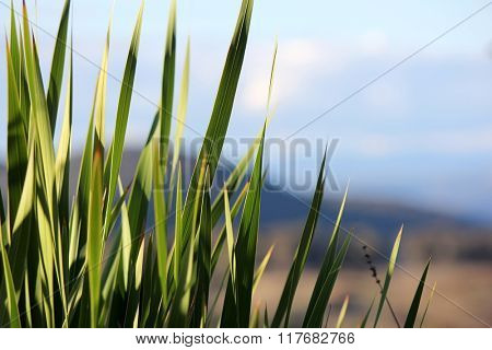 Plant Leaves with soft focus mountain background