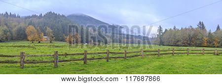 By autumn rain cow grazing on a farm in Washington State, USA