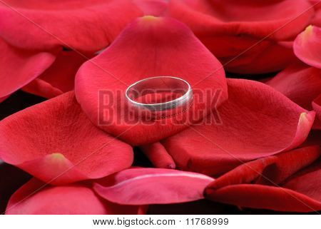 Silver Ring On Pile Of Rose Petals
