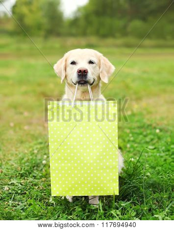 Beautiful Golden Retriever Dog Holding Green Shopping Bag In Teeth On Grass In Summer Park