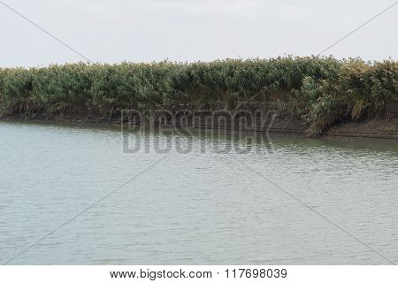 Irrigation Canal Shore