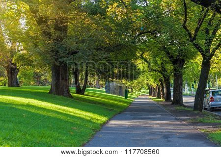 Melbourne - Jan 31 2016: Trees Alley Footpath St Kilda Road